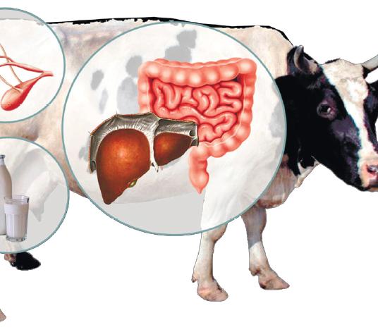 Регуляторные комплексы - упраление потреблением корма